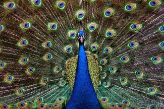 turkey-678230_640